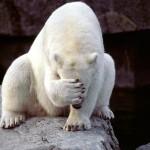 ice-king-polar-bear (1)
