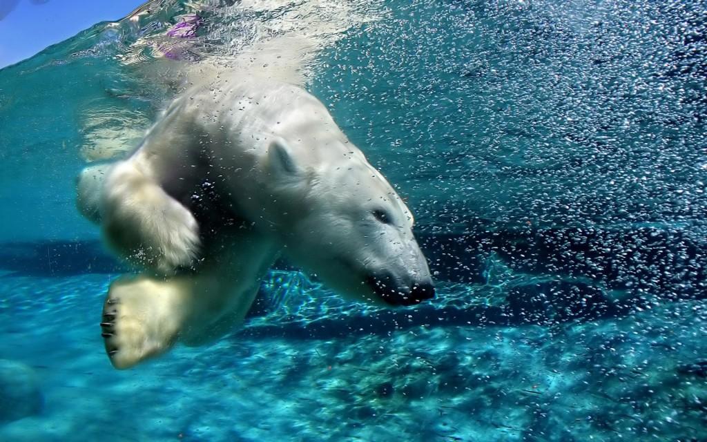 Ice King Polar Bear Wallpaper Collection