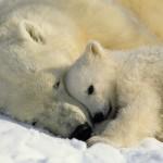 ice-king-polar-bear (14)