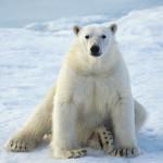 ice-king-polar-bear (3)