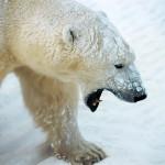 ice-king-polar-bear (7)
