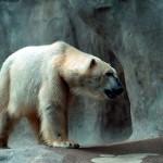 ice-king-polar-bear (9)