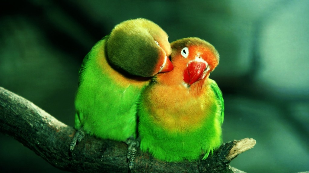 bird-wallpapers-stugon.com (12)