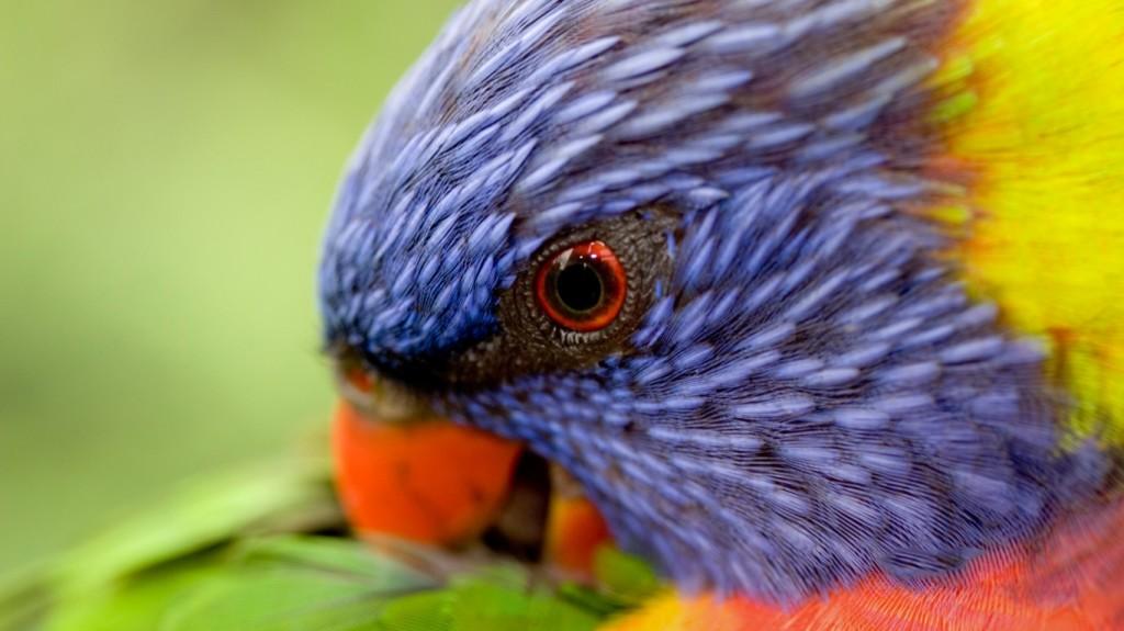 bird-wallpapers-stugon.com (14)
