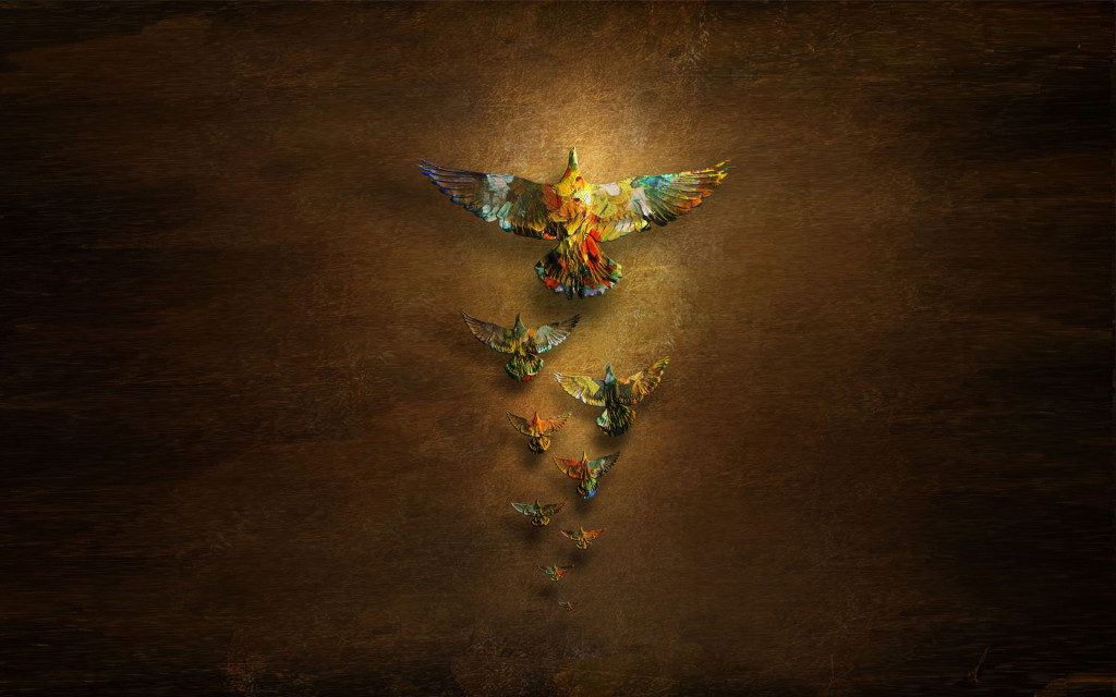 bird-wallpapers-stugon.com (15)