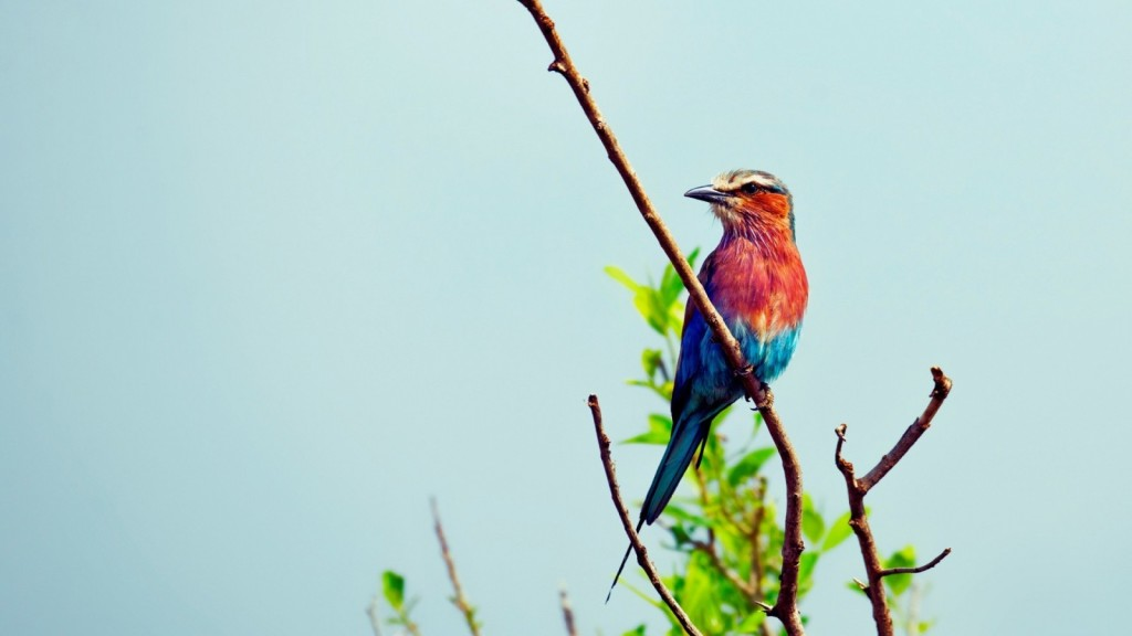 bird-wallpapers-stugon.com (2)