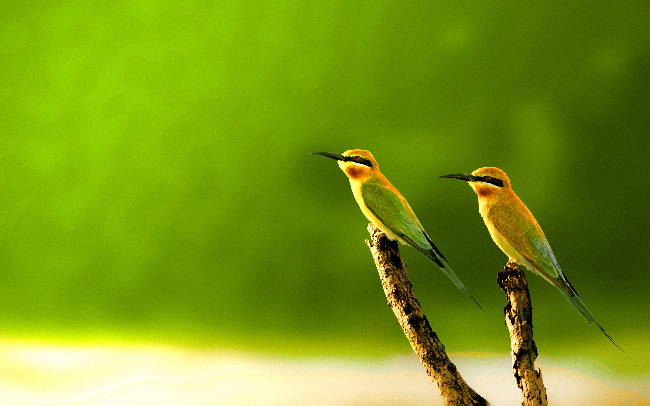 15+ Beautiful Birds Wallpaper Collection [HD Edition] - Stugon