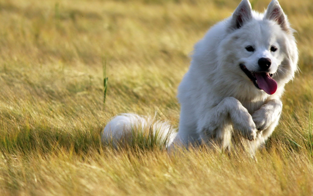 dog-wallpaper-collection-stugon.com (12)