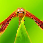 Awesome and Stunning HD Dragonflies Wallpaper Collection [Hand Picked]