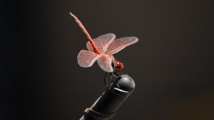dragonflies-wallpapers-stugon (5)